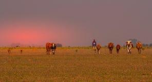 自然经济在有他的狗和牛的非洲 库存图片