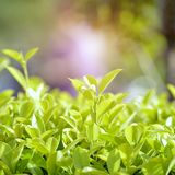 自然绿色纹理背景生态概念 库存照片