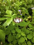 自然绿色背景和拷贝空间 一只棕色蝴蝶是su 库存照片