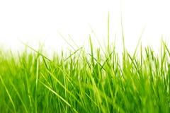 自然绿色背景 免版税库存图片