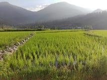 自然绿色领域小山夏天 免版税库存图片
