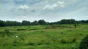 自然绿色  背景自然 美丽的天空 宽自然绿色  免版税库存照片