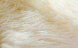 自然羊皮蓬松毛皮地毯极端宏观背景 库存图片