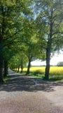 自然美丽的景色  免版税图库摄影
