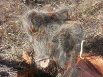 自然美丽的毛虫 免版税库存图片