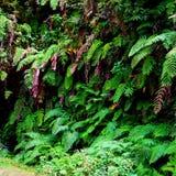 自然美丽的草植物群 免版税库存图片