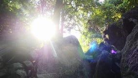 自然美好的横向 太阳热带雨林和光芒  慢的行动 1920x1080 影视素材