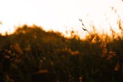 自然美好的花卉春天摘要背景  进展的宏指令分支与软的焦点的在柔和的轻的迷离bokeh 免版税图库摄影