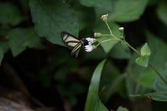 自然美好,蝴蝶飞行 免版税库存图片