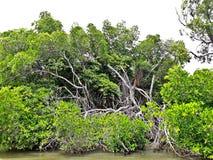 自然联合国盖拉族 库存照片