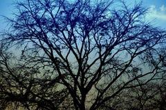 自然背景和outdoour和日落摄影 免版税库存照片
