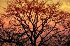 自然背景和outdoour和日落摄影 库存照片