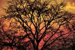 自然背景和outdoour 图库摄影