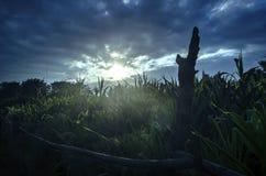 自然背景在日落关闭的照片板料在温暖的叶子由后照的剪影太阳的颜色宏观bokeh关闭发出光线轻的betwe 库存照片
