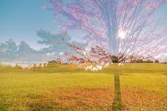 自然背景在秋天公园在晴朗的温暖的天 库存图片