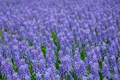 自然背景的会开蓝色钟形花的草 免版税库存图片