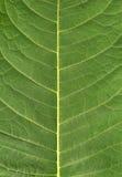 自然背景的叶子 库存图片