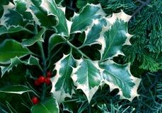 自然背景的圣诞节 库存图片