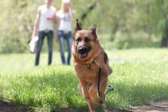 自然背景的狗 图库摄影