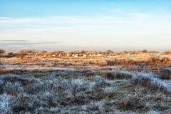 自然背景,荷兰沿海特点在冬天 库存照片
