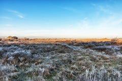 自然背景,荷兰沿海特点在冬天 免版税库存照片