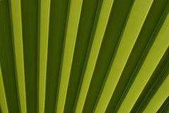 自然背景,绿色棕榈叶纹理 免版税库存照片