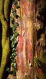 自然自然氖 免版税库存图片