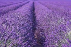 自然花卉淡紫色背景,紫外概念-年的颜色2018年 库存照片