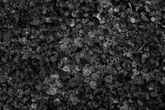 自然花卉热带无缝的样式 单色 免版税库存图片
