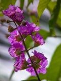 自然花卉生活方式背景摄影 库存照片
