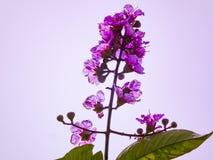 自然花卉生活方式背景摄影 免版税库存图片