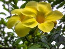 自然花卉生活方式背景摄影 图库摄影