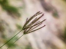 自然花卉生活方式背景摄影 免版税库存照片