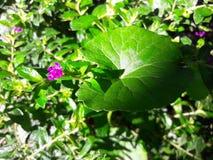 自然花和叶子 免版税库存照片