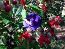 自然花和叶子 库存照片