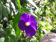 自然花和叶子 库存图片