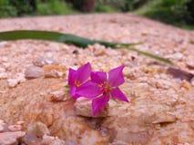 自然花和叶子 免版税库存图片