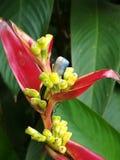 自然花在斯里兰卡 免版税库存照片