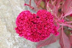 自然花心脏为华伦泰和母亲节 免版税库存照片