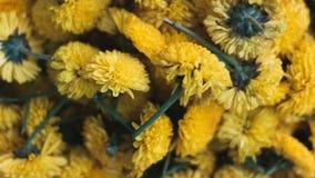 自然花背景墙纸 库存图片