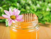 自然花蜂蜜 库存图片