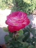 自然花&庭院环境 免版税库存图片