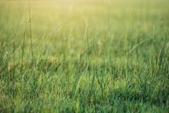自然草和秀丽  免版税库存图片