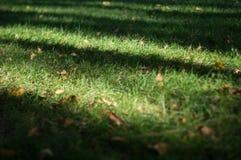 自然草坪 免版税库存照片