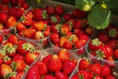 自然草莓 免版税库存照片