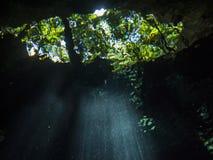 自然荧光的纹理 库存图片