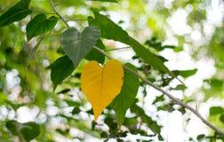 从自然落叶的绿色和黄色背景图象 库存图片