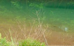 自然蓝色池塘 库存图片