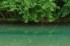 自然蓝色池塘 库存照片