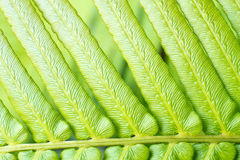 自然蕨叶子宏指令  库存照片